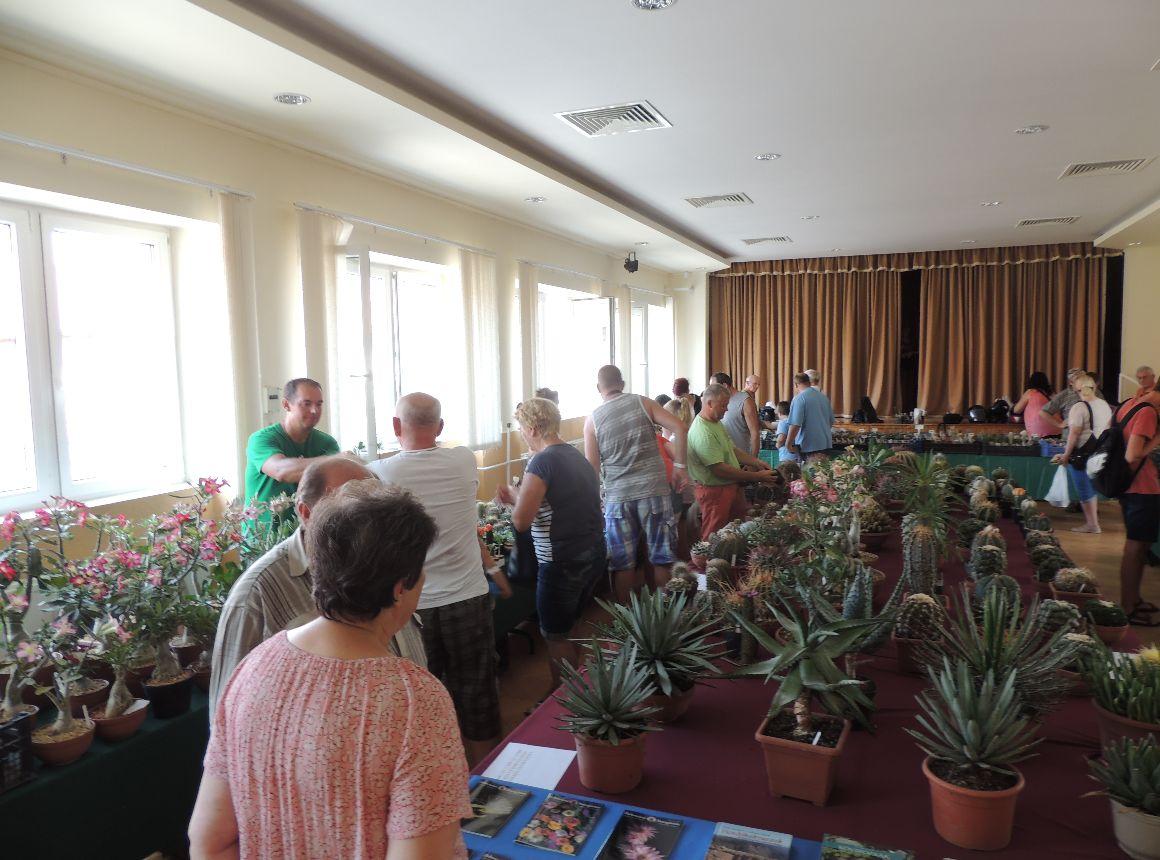 Öreg Malom Apartman-kaktuszk iállítas